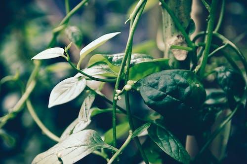 植物群, 特寫, 綠色, 綠葉 的 免费素材照片