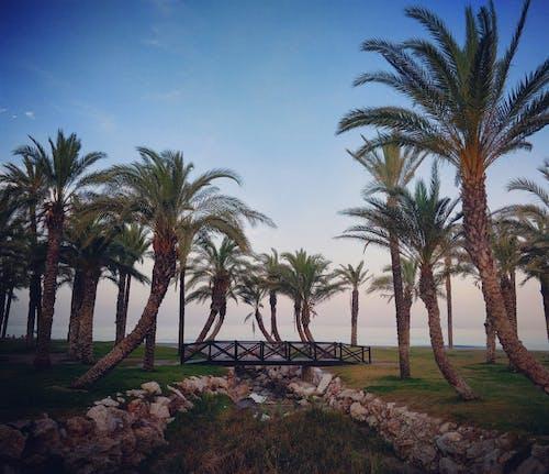 Free stock photo of beach, bridge, palm, palm tree