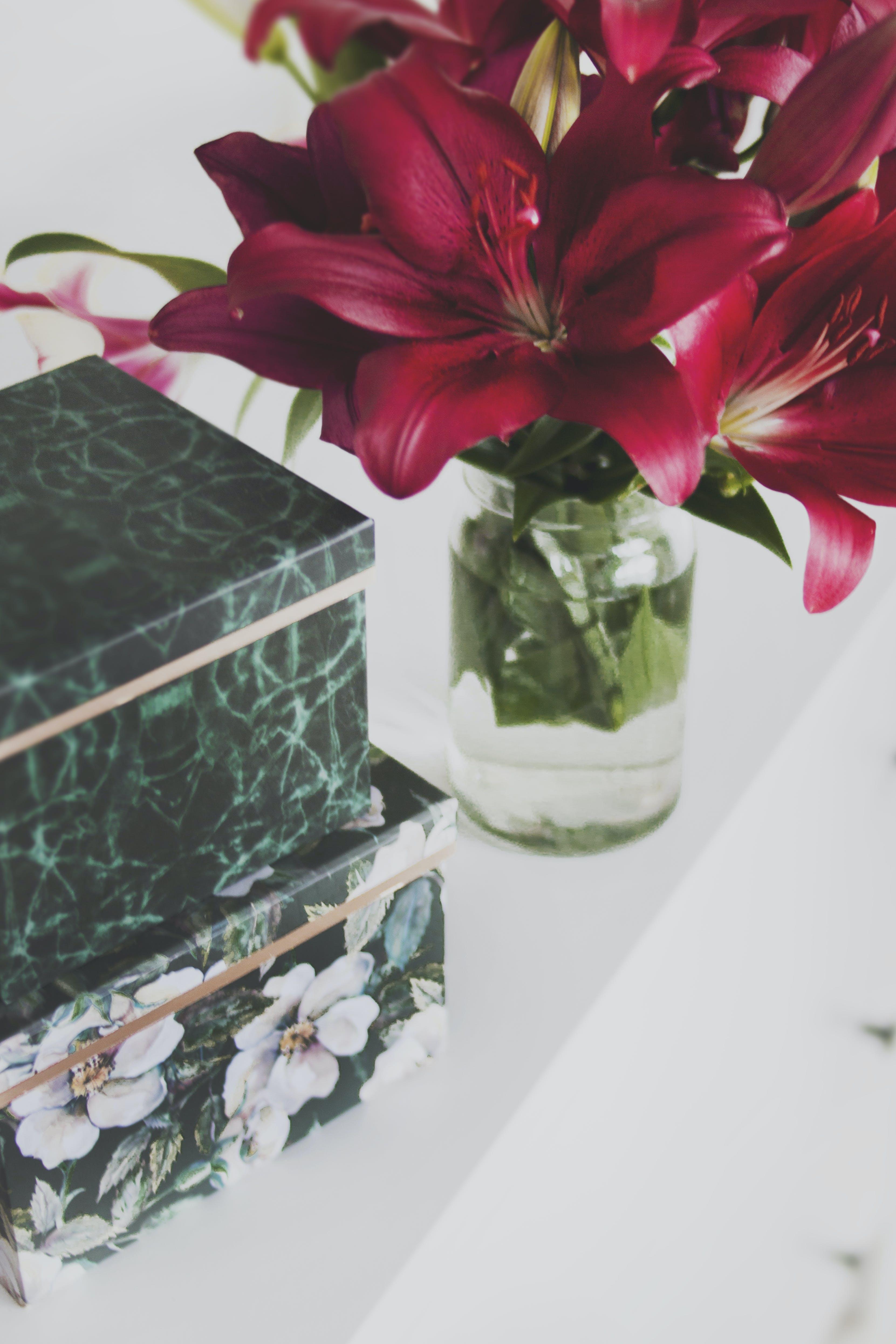 Základová fotografie zdarma na téma barva, flóra, krabice, krásný