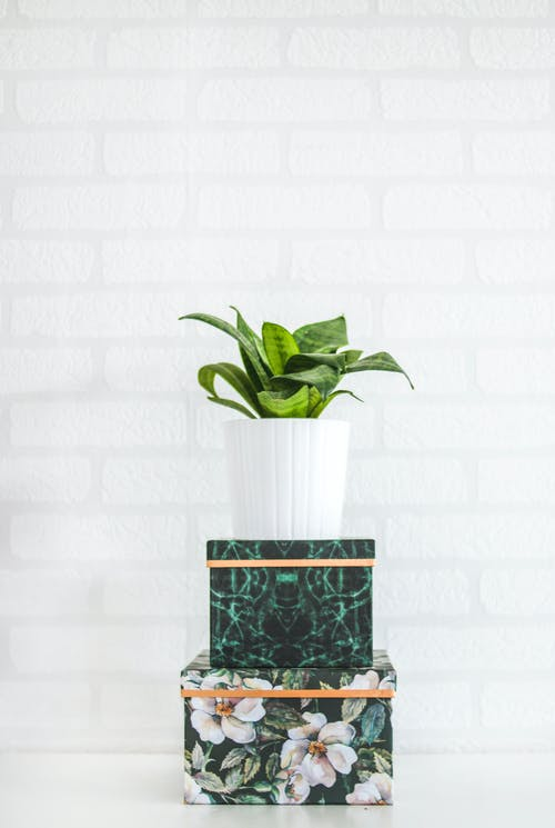 Potted Green Plant Near Wall