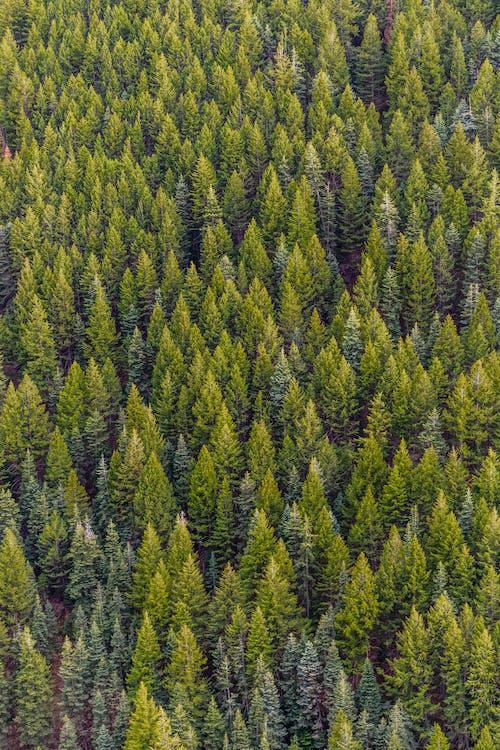 árvores, aumento, cênico