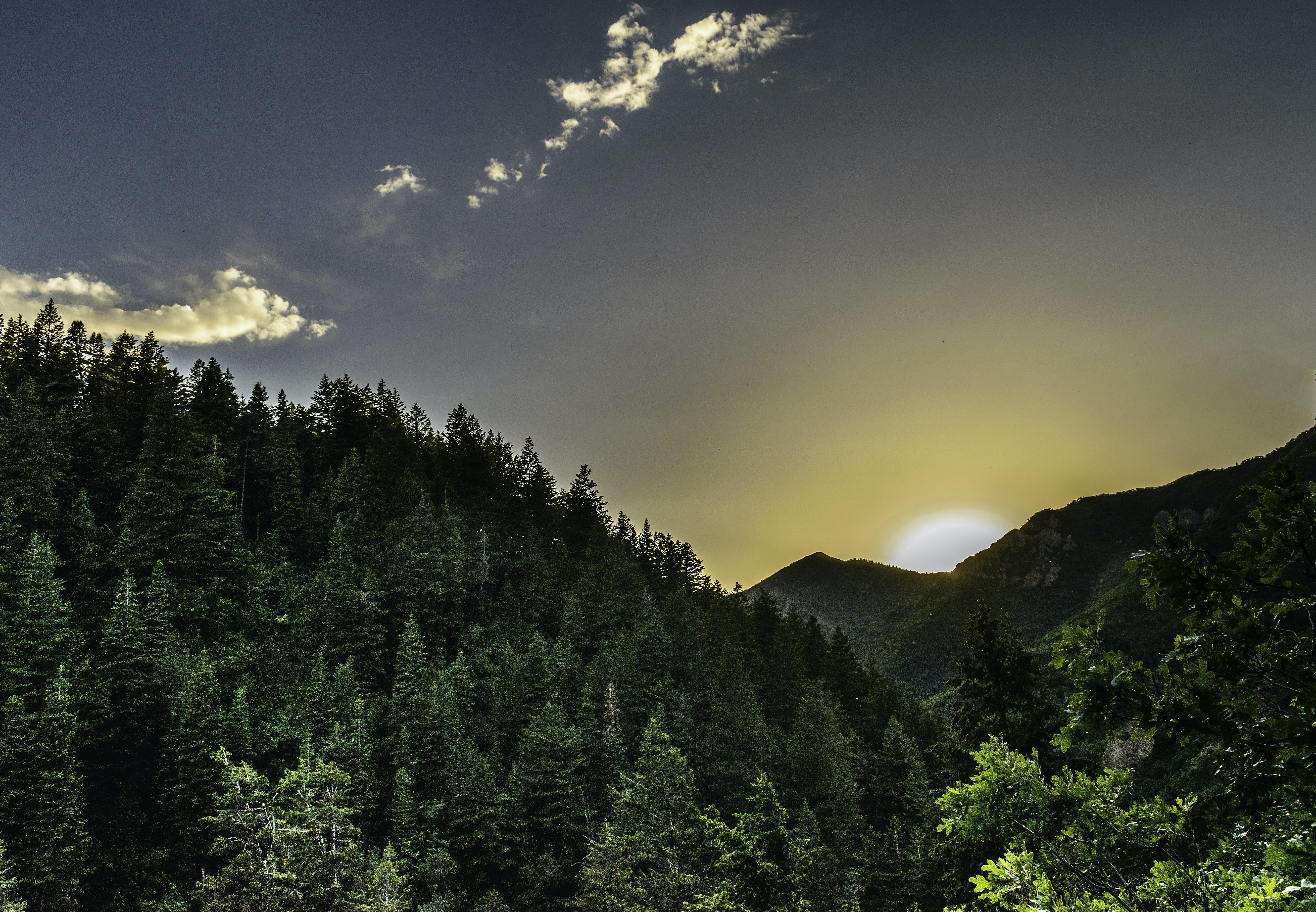 Безкоштовне стокове фото на тему «гора, Денне світло, дерева, Захід сонця»
