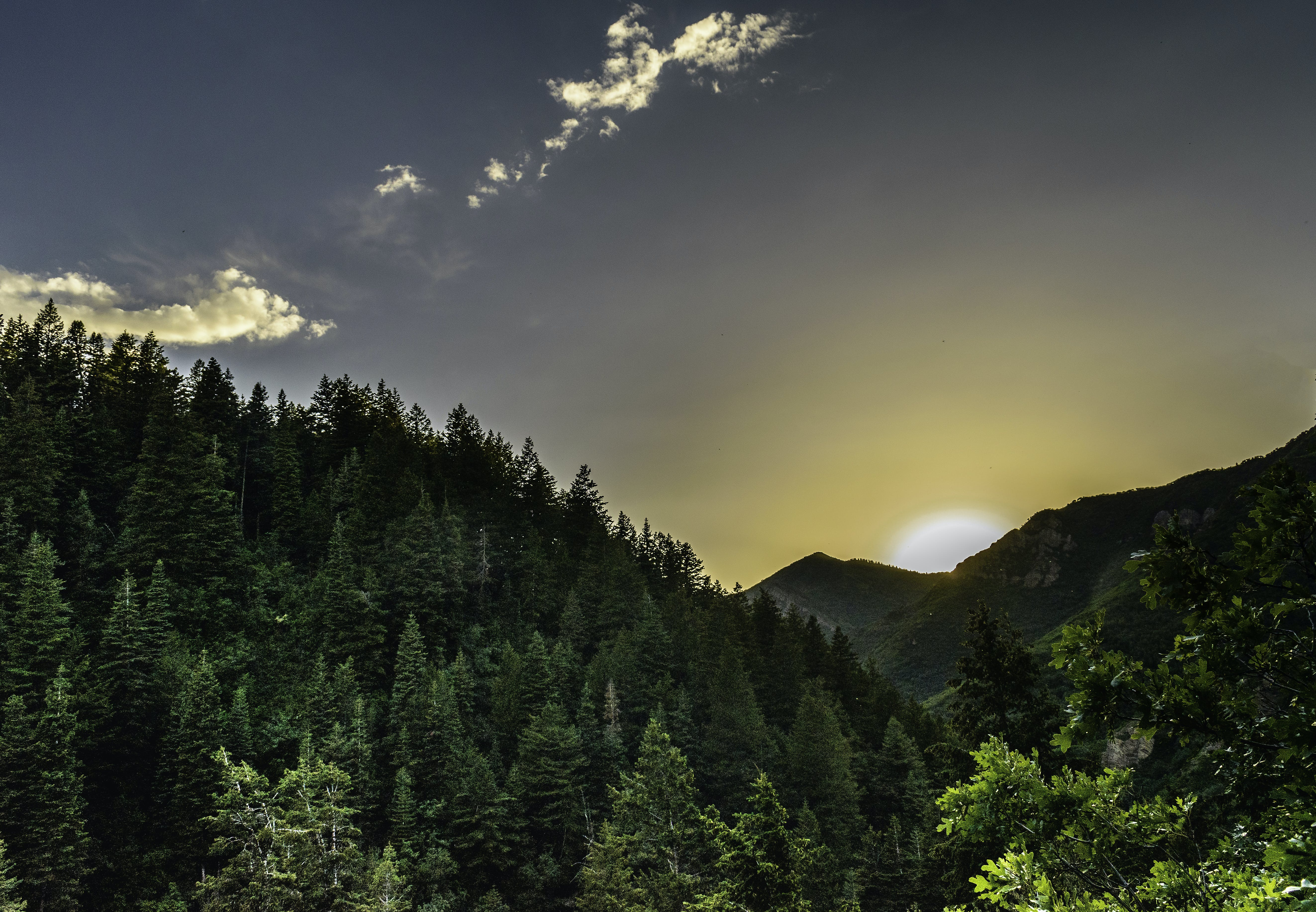Forest Sunrise View