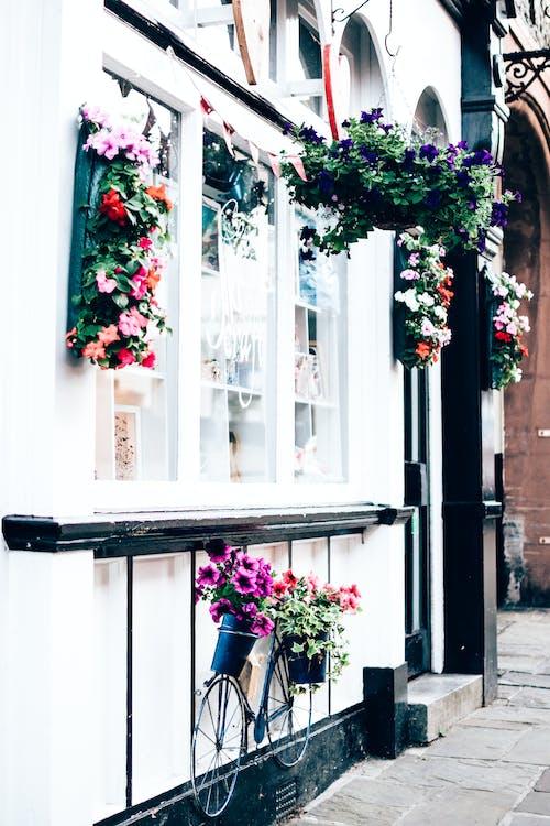 Foto d'estoc gratuïta de balcó, bonic, carrer, edifici