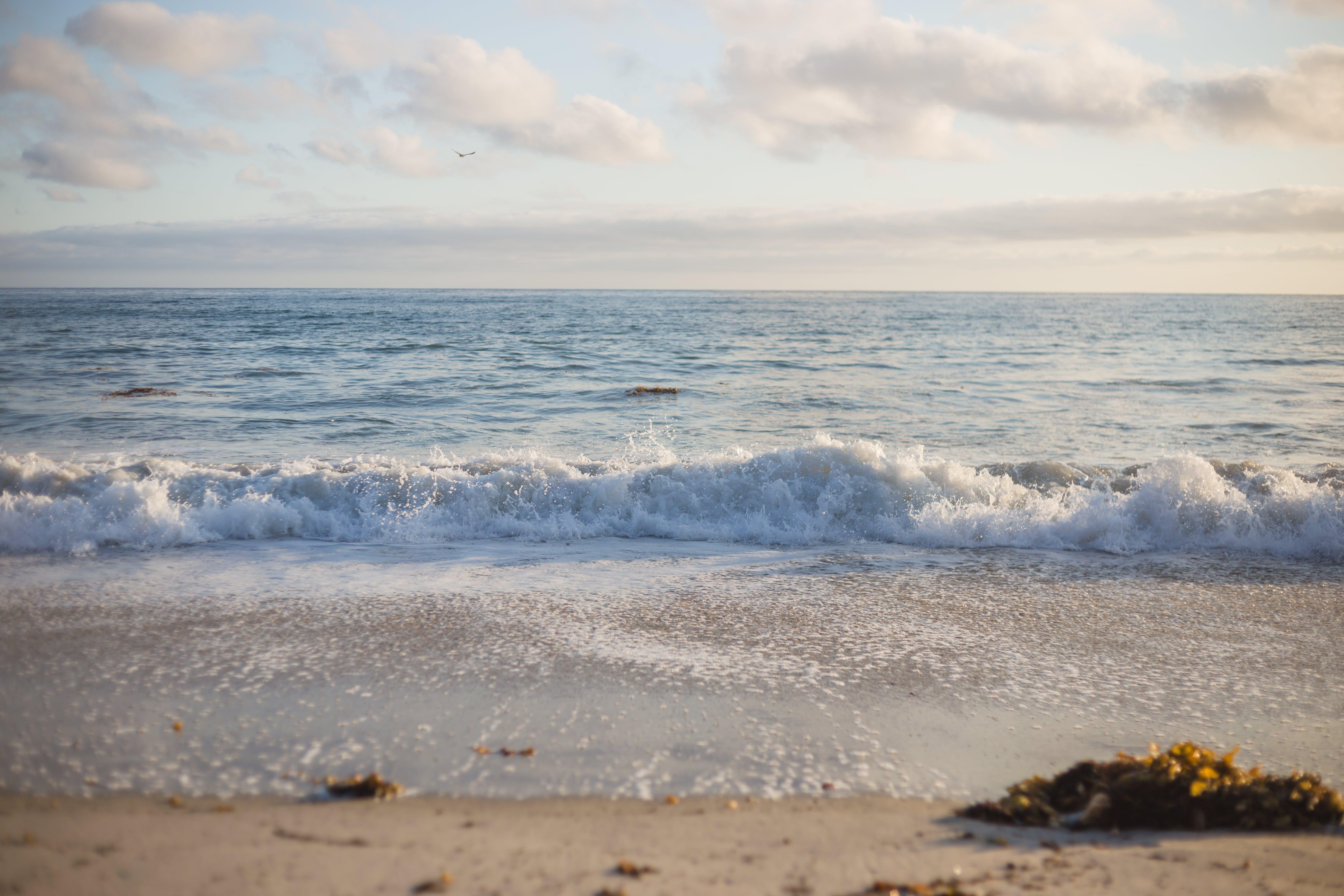 Free stock photo of #2018 #beach #beautiful #california #clouds #kelp