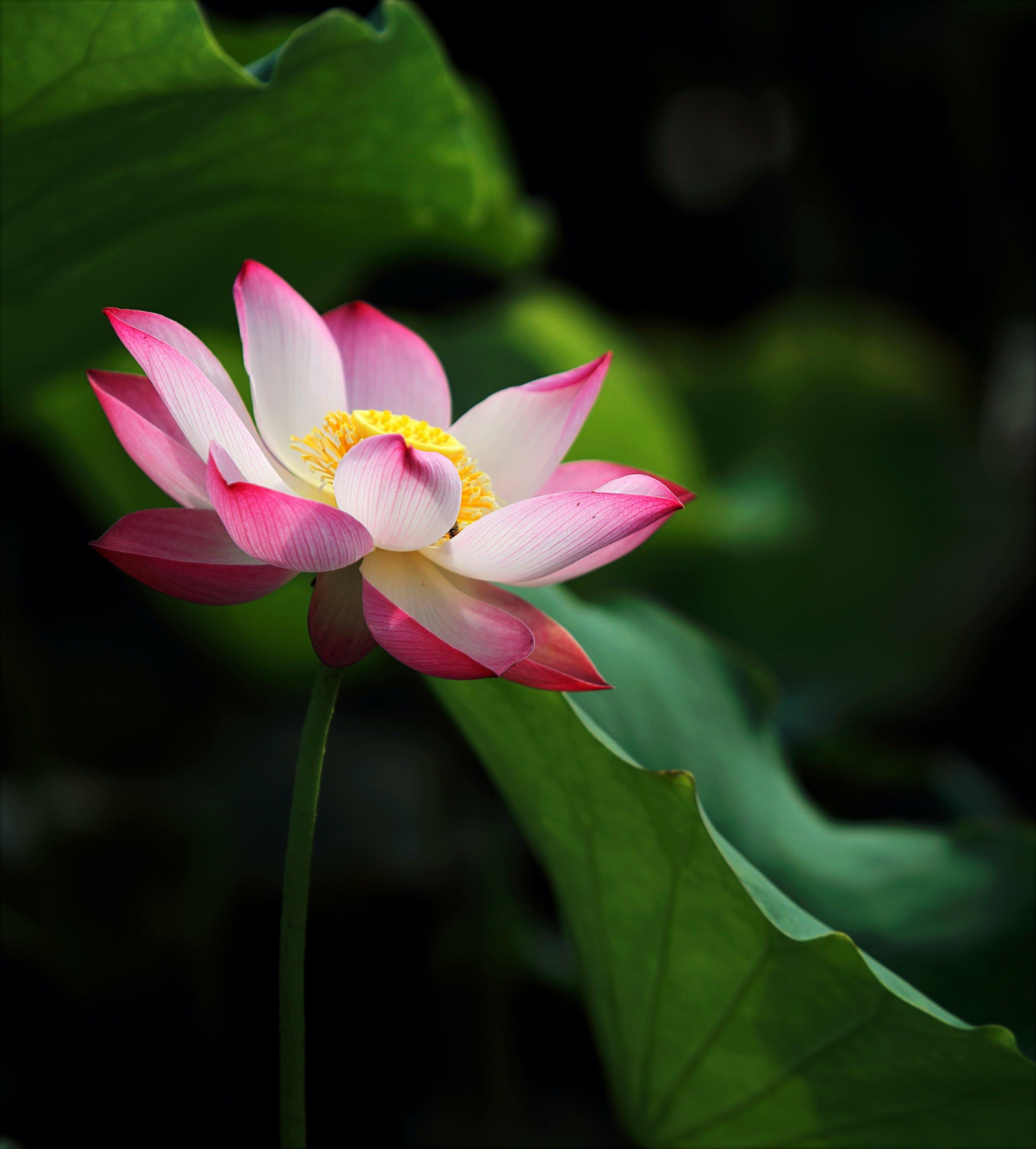 Ảnh lưu trữ miễn phí về ao, cận cảnh, cánh hoa, hệ thực vật