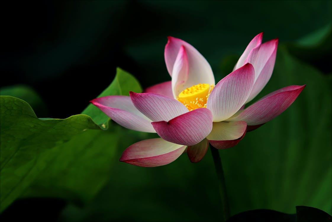 ботанический, водное растение, водный