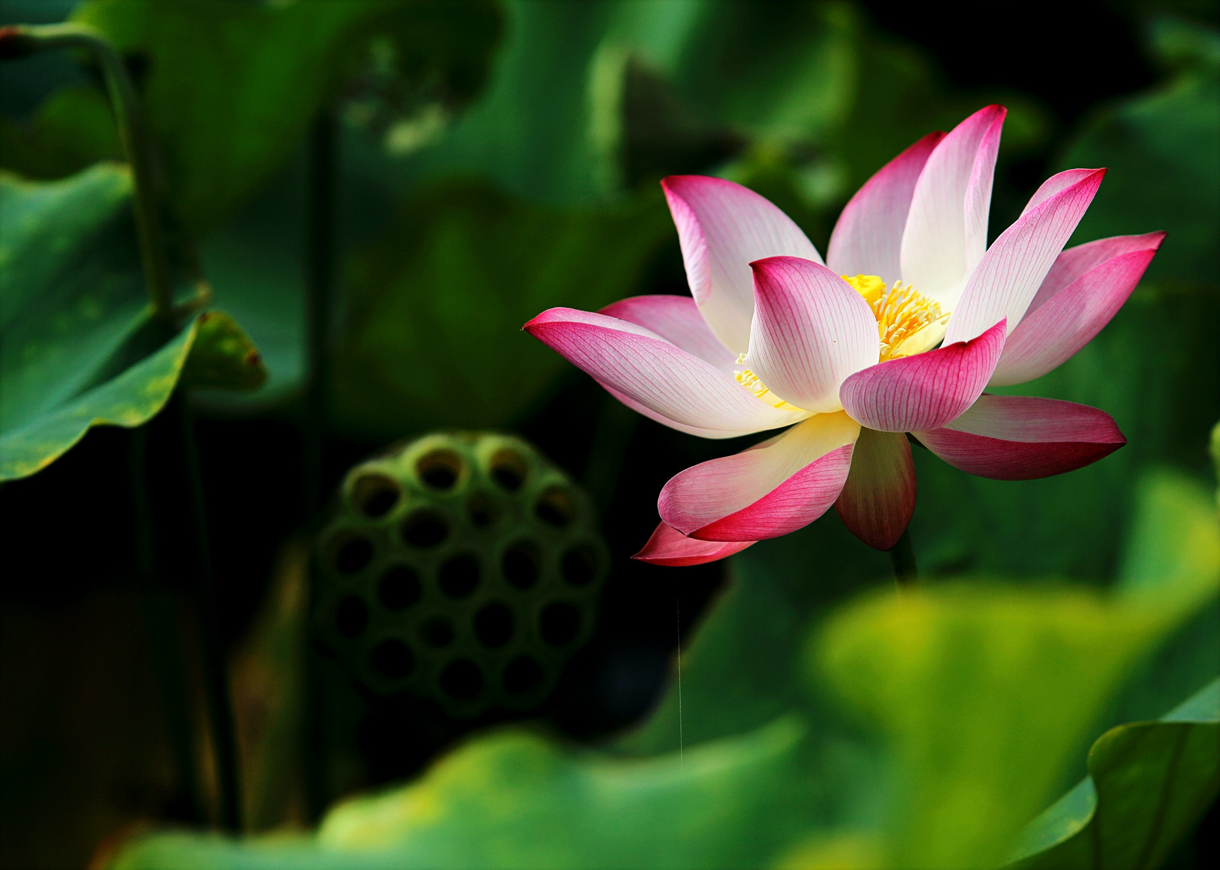 Shallow Focus Photography of White and Pink Flower