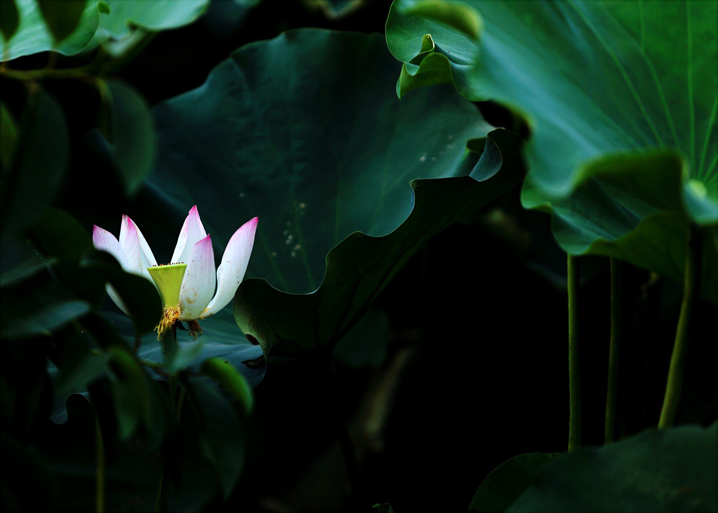 Immagine gratuita di esotico, fiore, fioritura, flora
