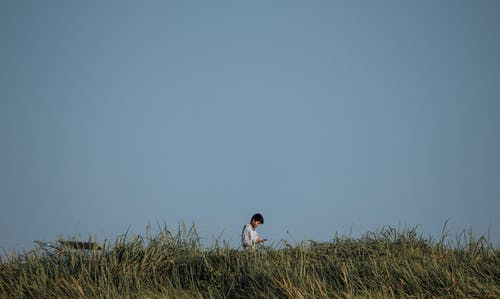 Ảnh lưu trữ miễn phí về ánh sáng ban ngày, bầu trời, cánh đồng, cỏ