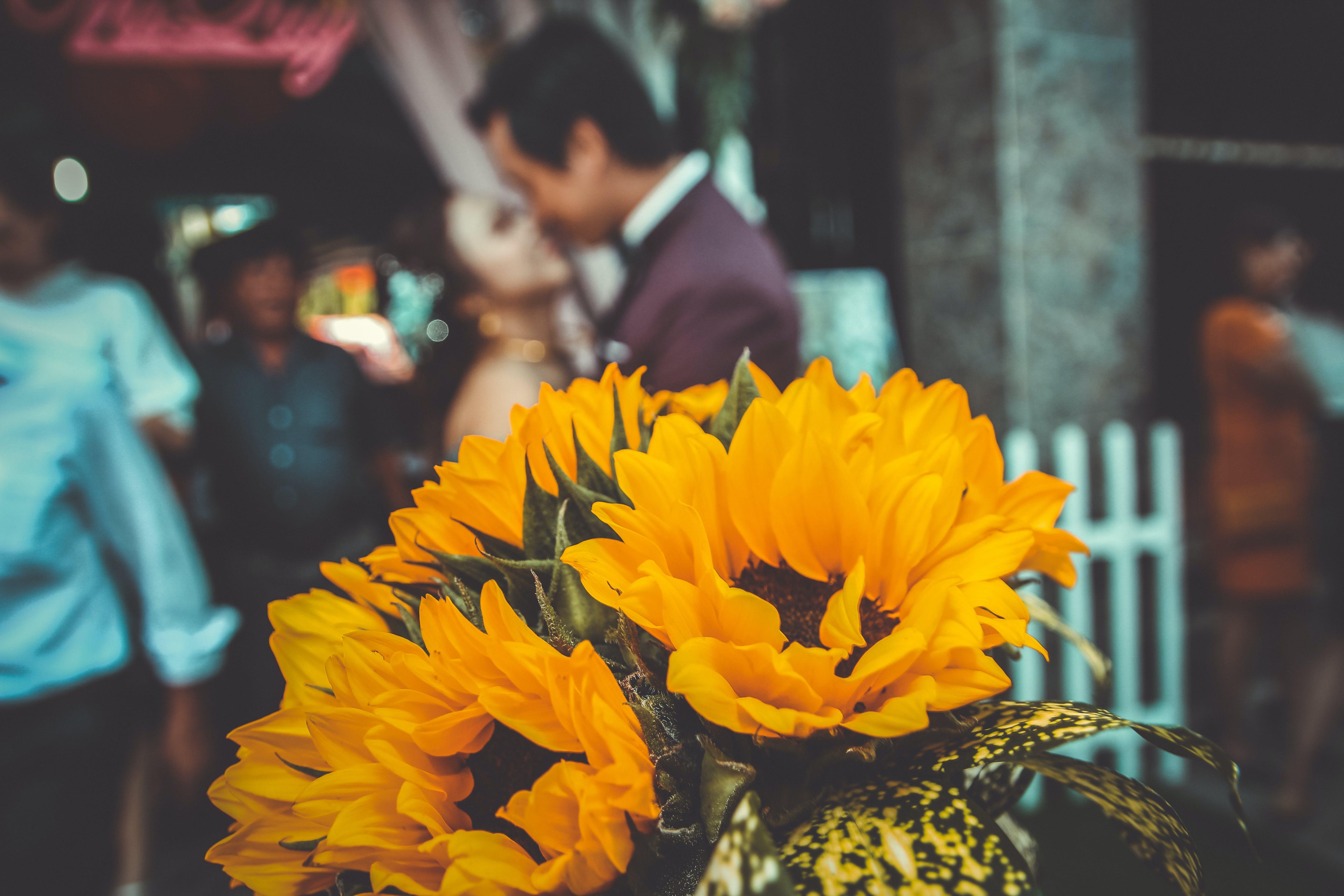 Gratis lagerfoto af blomst, blomsterarrangement, buket, close-up