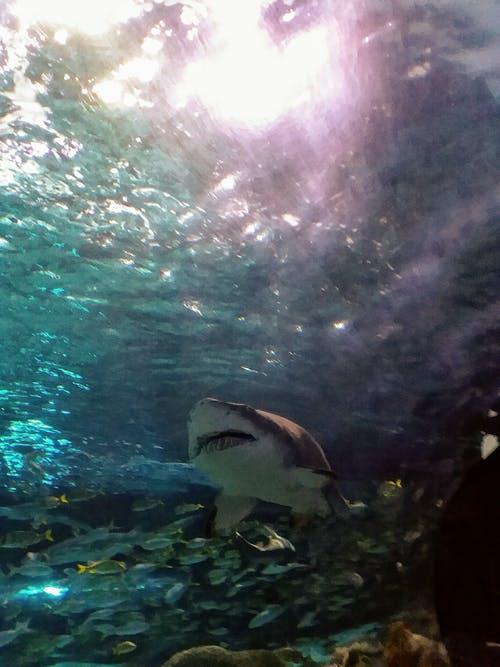 Free stock photo of #animals, #aquarium, #shark