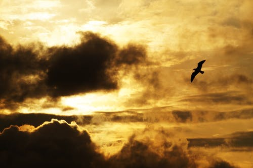 Silhouette Photography of Flying Bird during Golden Hour