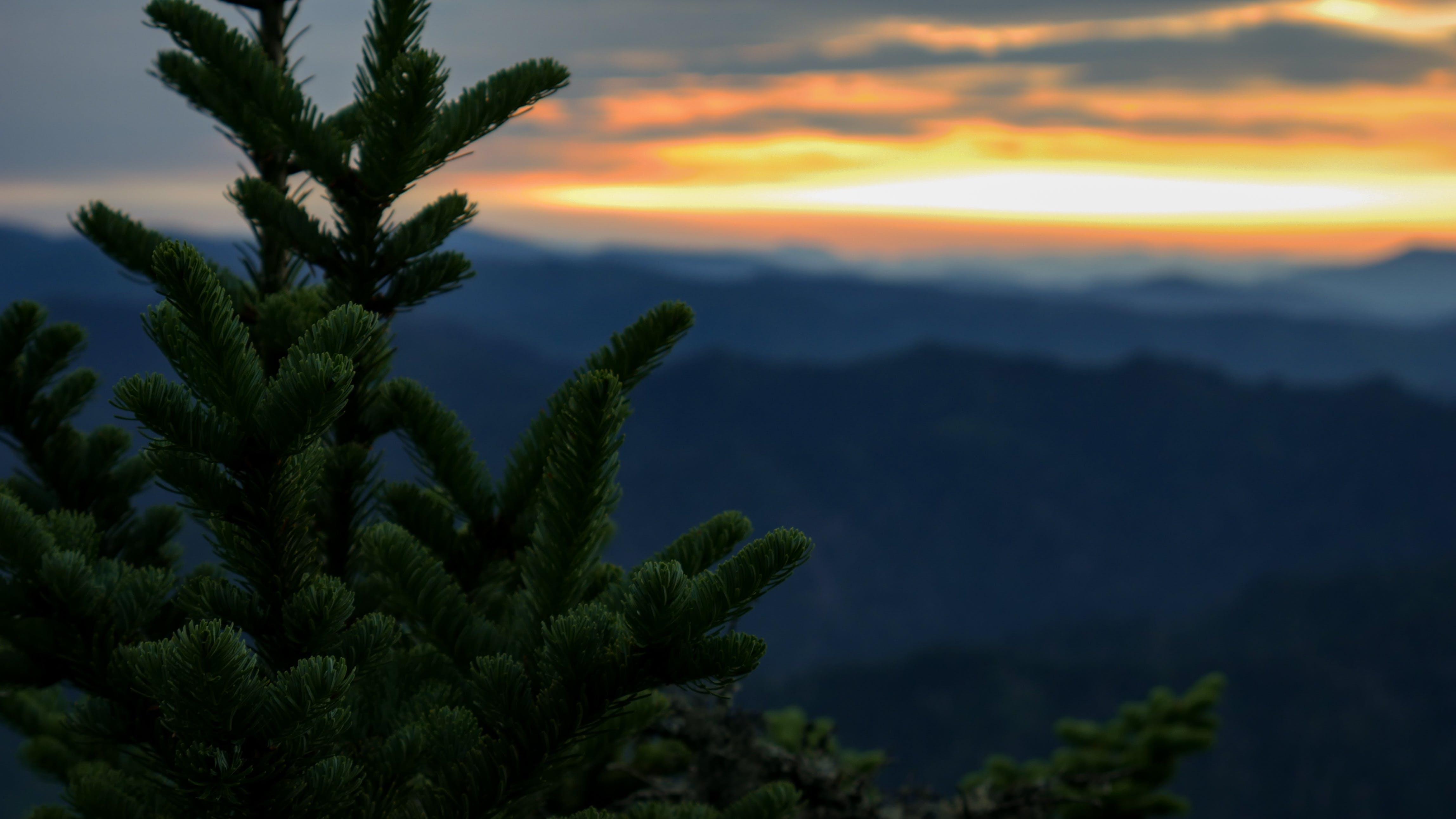 aften, bjerge, fyrretræ