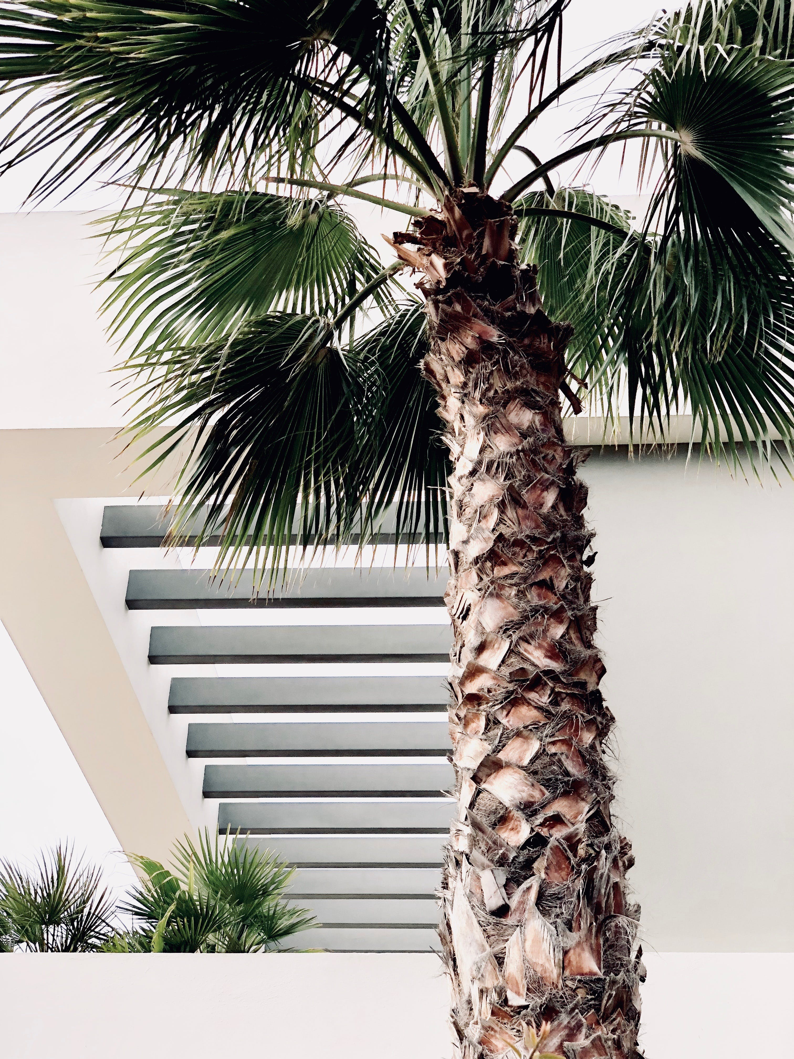 Photo of Palm Tree