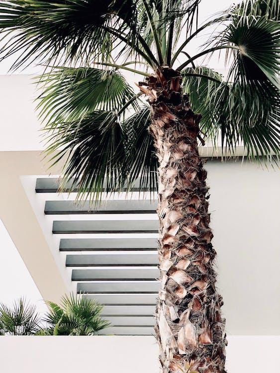 Photo of Palm Tree