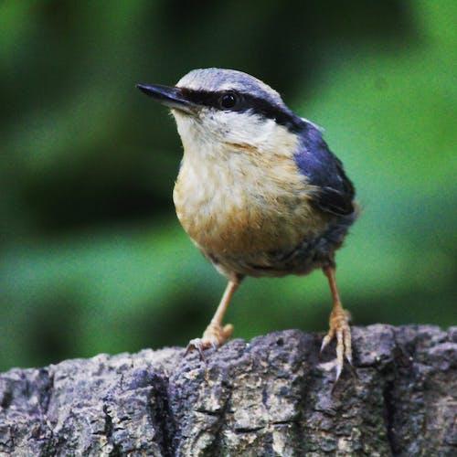 Бесплатное стоковое фото с #bird #birdwatching #wildlife