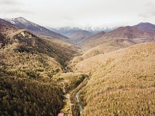 Ingyenes stockfotó csúcs, ég, erdő, fák témában