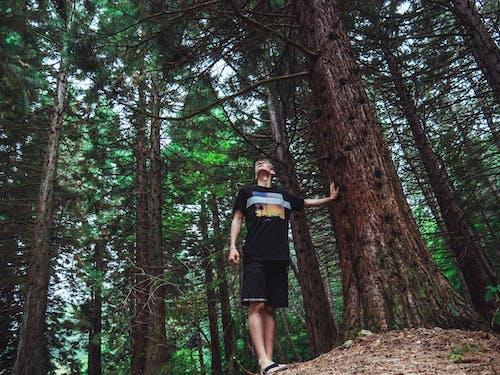 Gratis lagerfoto af afslappet, casual, dagslys, fyrretræer