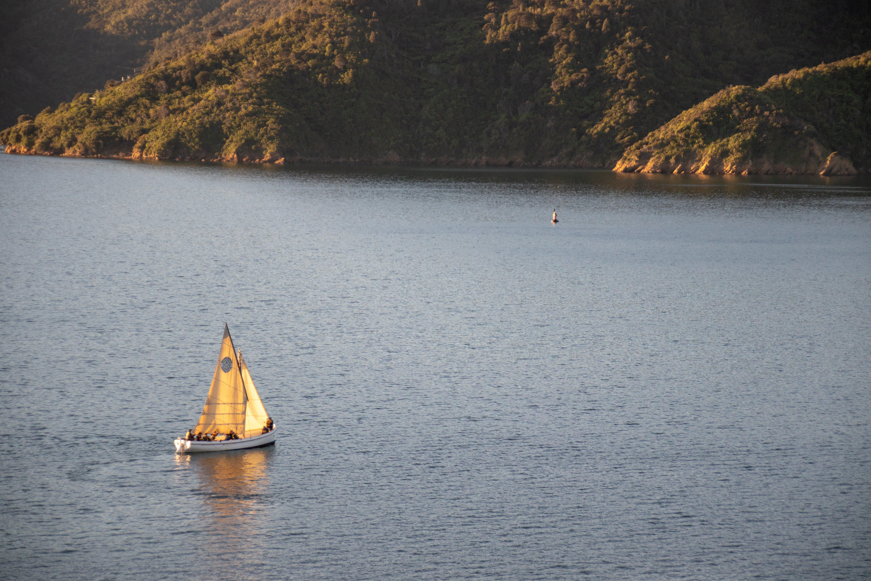 White Sail Boat on Water Near Land