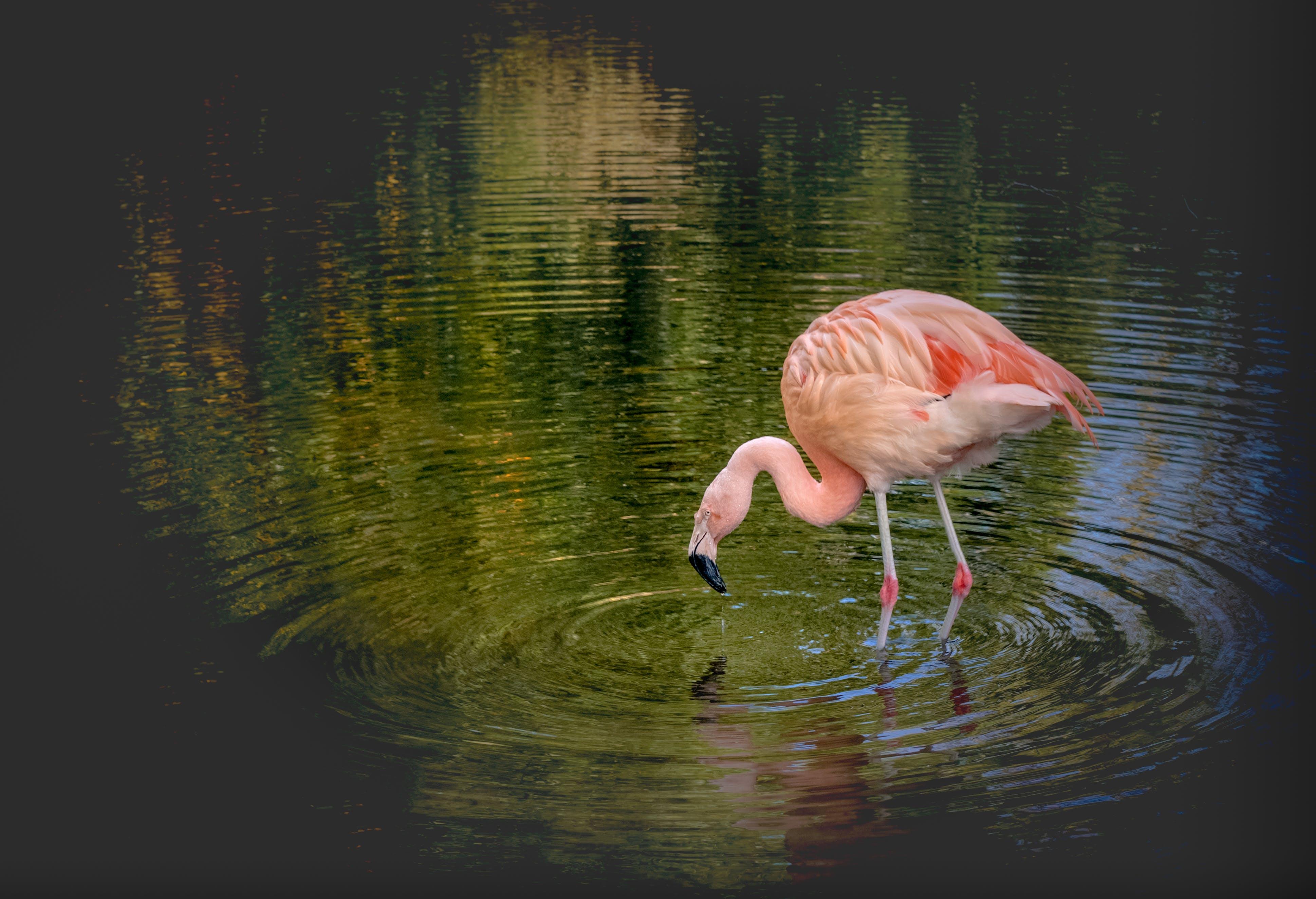 Free stock photo of animal, beak, beautiful, bird