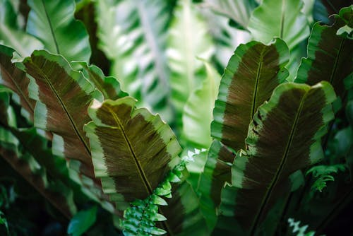 Close-up Photograph of Green Leafed Plant