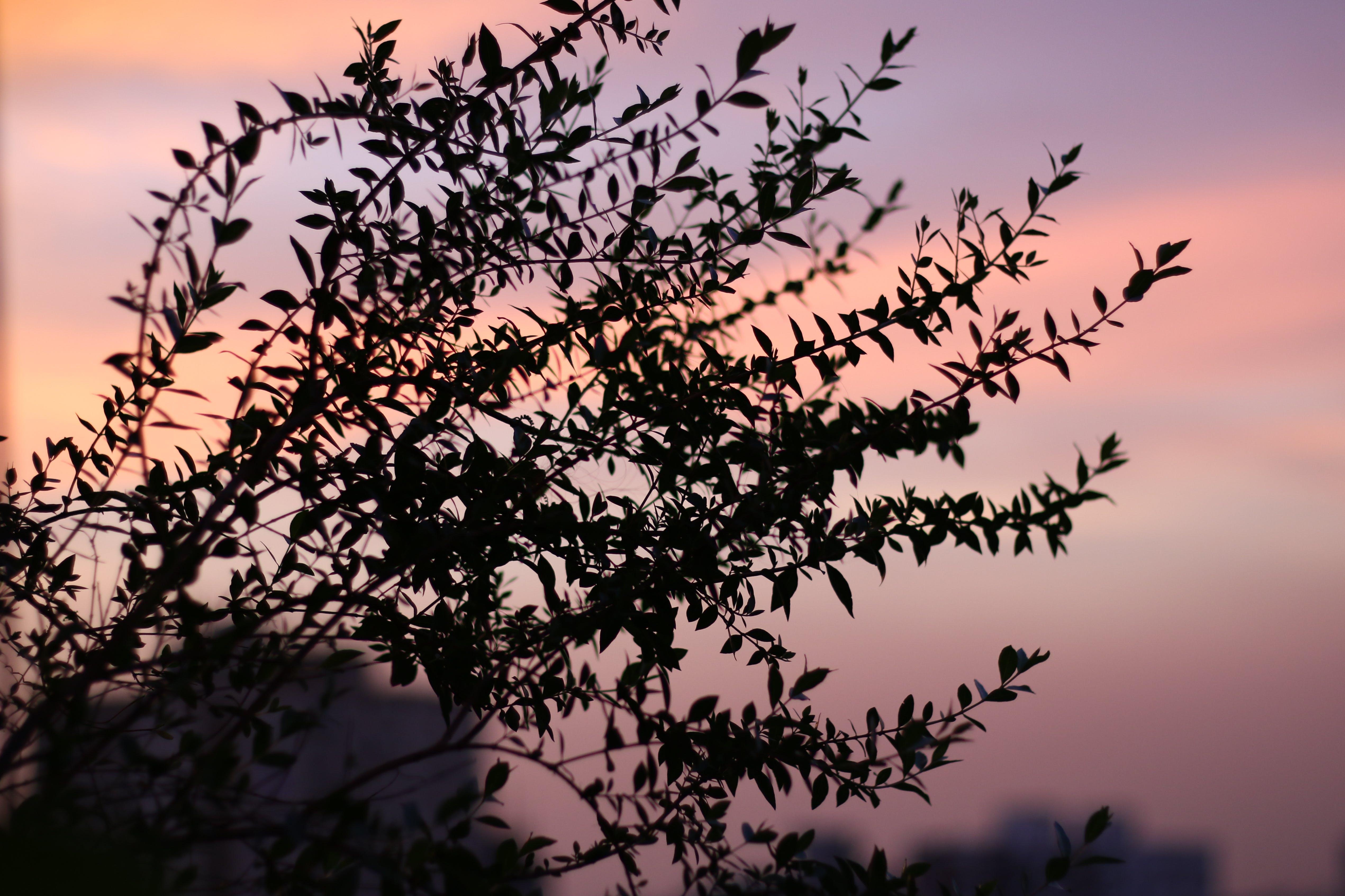 Free stock photo of aesthetics, bokeh, evening sky, golden sunset