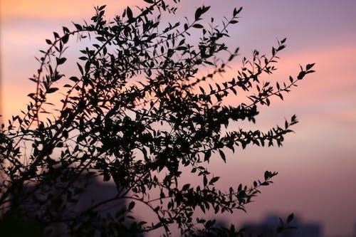 傍晚的天空, 審美觀 的 免費圖庫相片