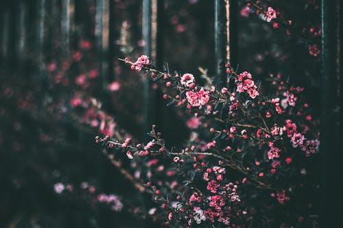 Základová fotografie zdarma na téma barvy, flóra, květ, květiny