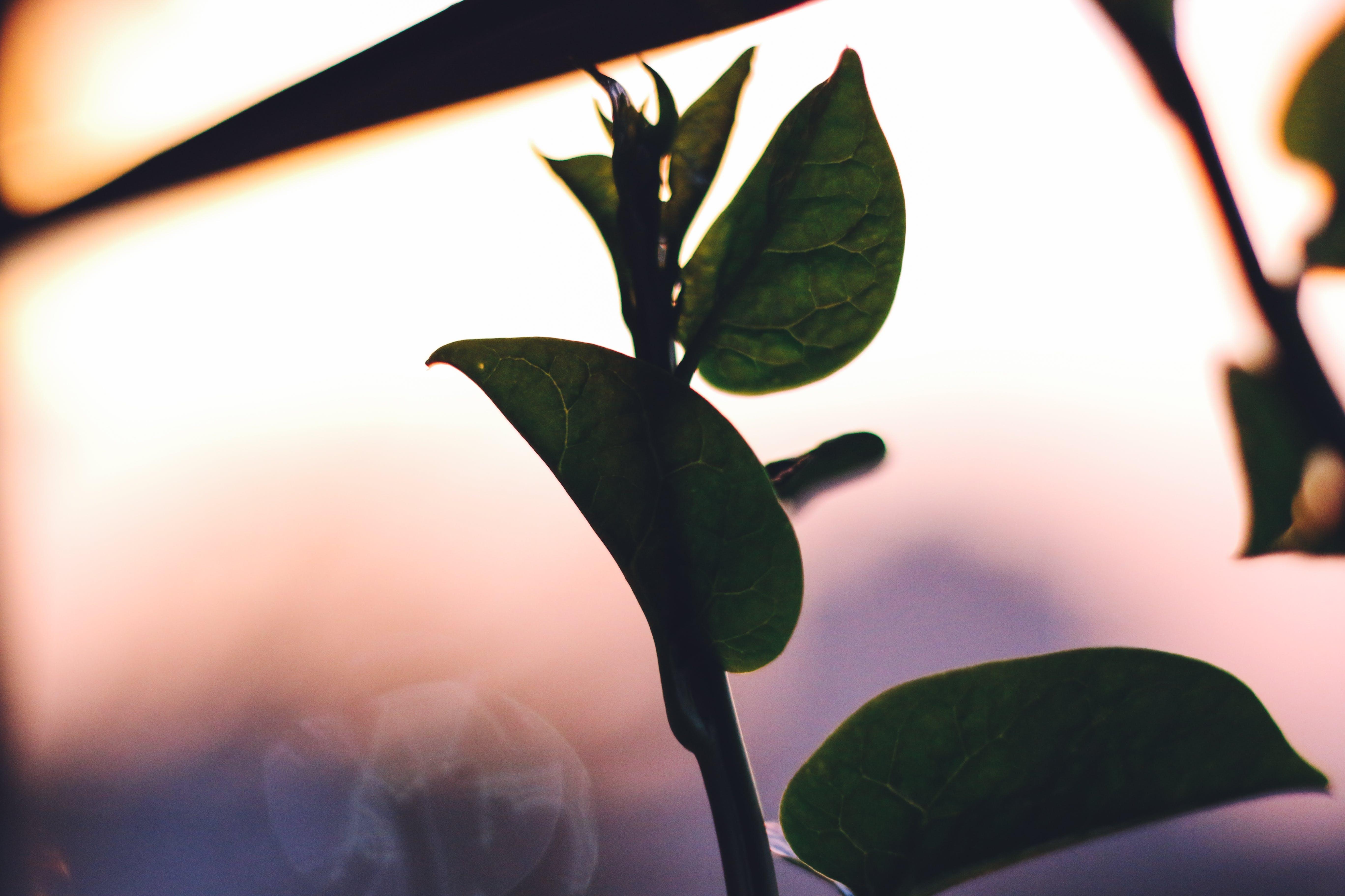 Kostenloses Stock Foto zu Ästhetik, bokeh, goldenen sonnenuntergang