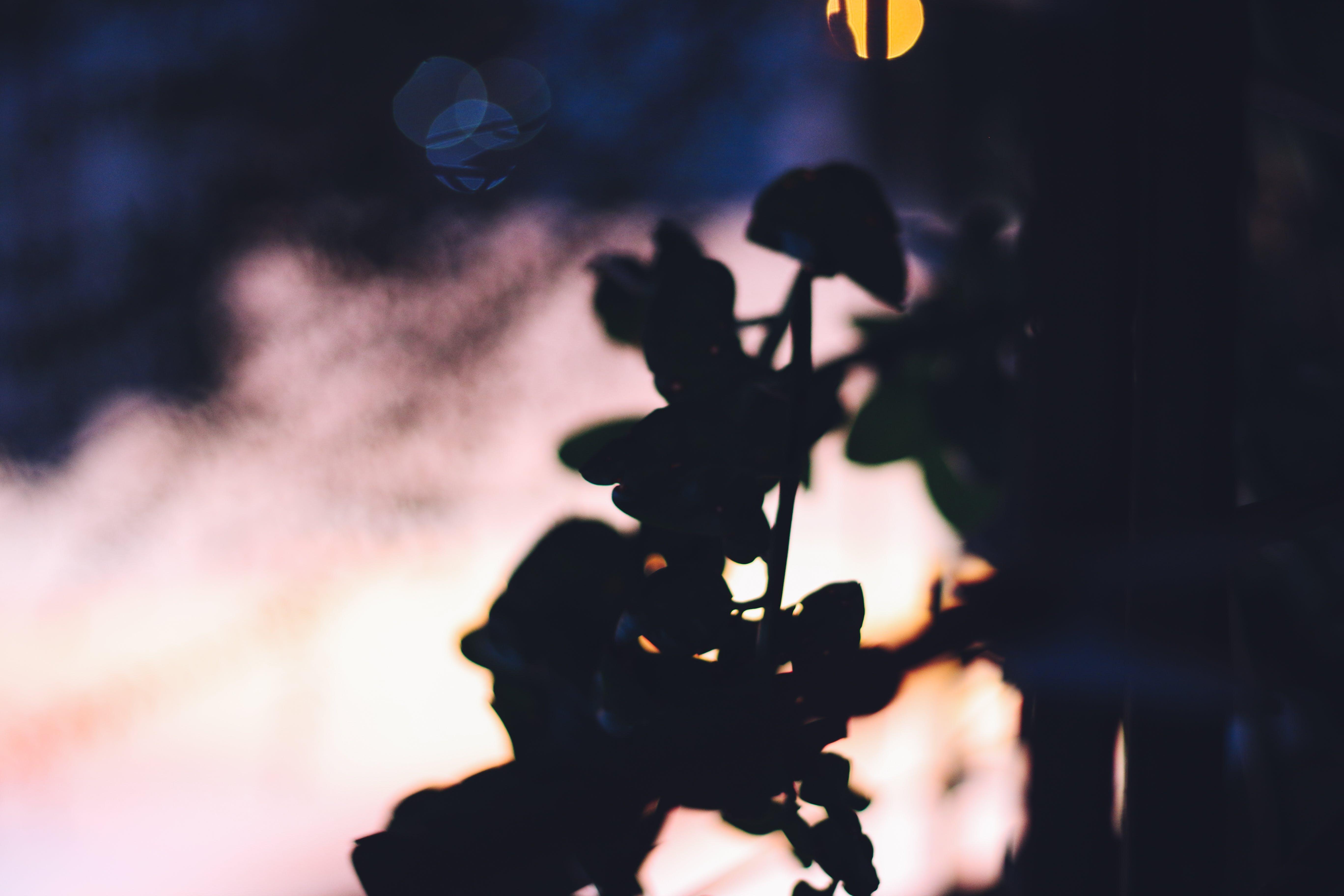 Free stock photo of aesthetics, bokeh, golden sunset