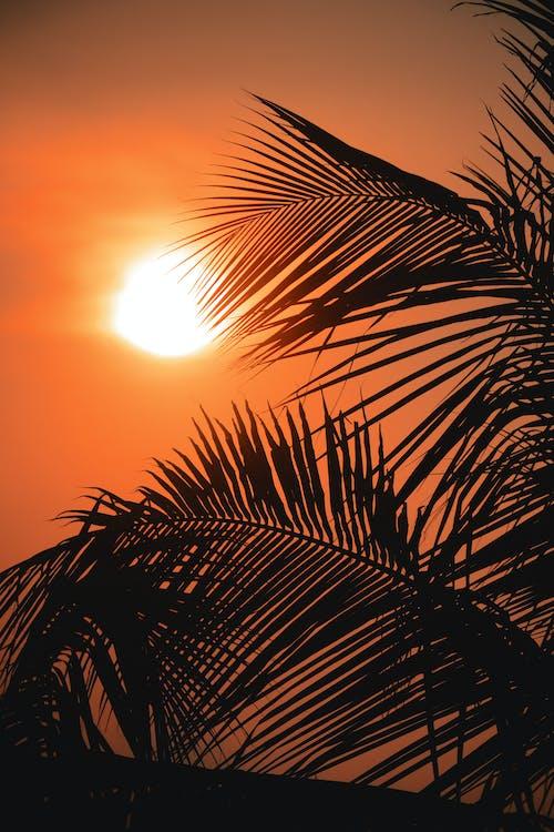 Fotos de stock gratuitas de árbol, cielo, escénico, Hojas de palmera