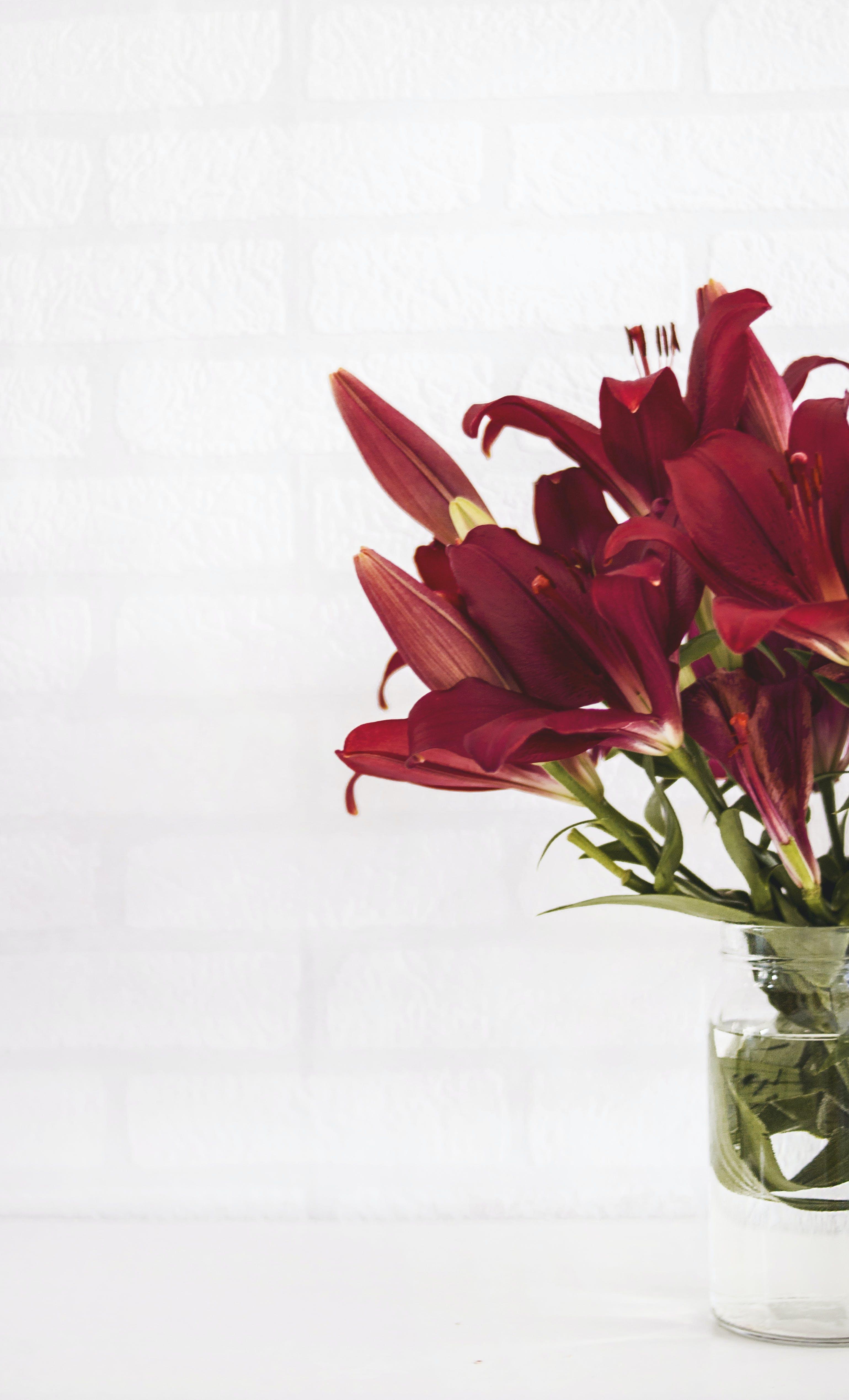 Fotos de stock gratuitas de agua, brillante, colores, flora