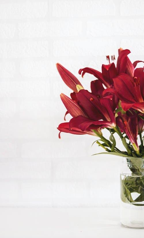 Foto stok gratis air, bejana, berbunga, bunga merah