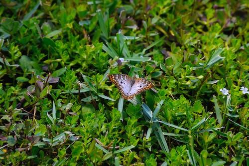 çim, hayvan, kanatlar, kelebek içeren Ücretsiz stok fotoğraf