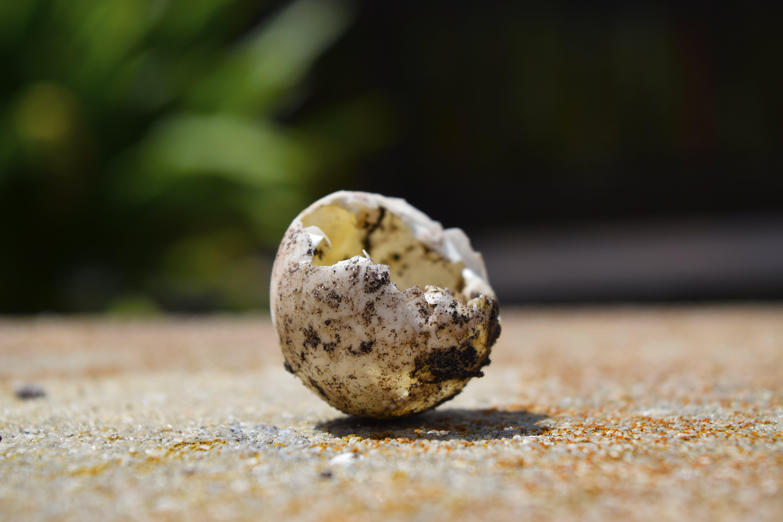 Free stock photo of blur, eggshell, focus, macro