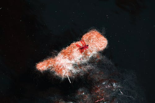 hayvan, karşıtlık, kırmızı, Su içeren Ücretsiz stok fotoğraf