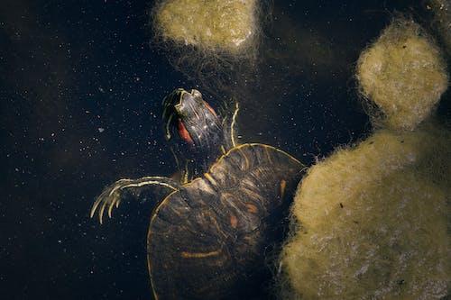 amfibi, bakteriler, doğa, gölet içeren Ücretsiz stok fotoğraf