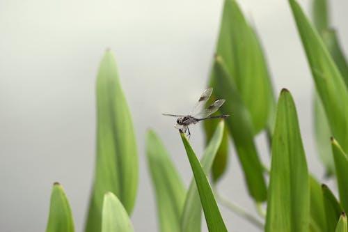 bitkiler, böcek, çim, gölet içeren Ücretsiz stok fotoğraf