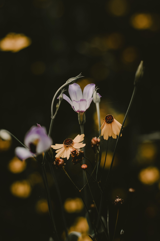 Безкоштовне стокове фото на тему «Букет квітів, бутони, заводи, зростання»