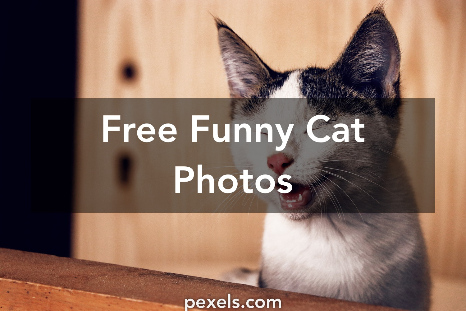 1000 engaging funny cat photos pexels free stock photos