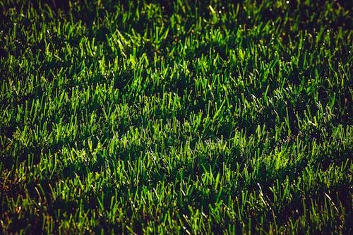 Photos gratuites de herbe, léger, ombres, vert