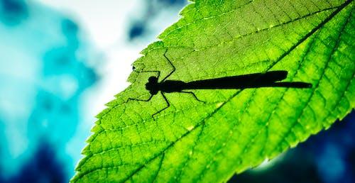Photos gratuites de bleu, libellule, ombres, vert