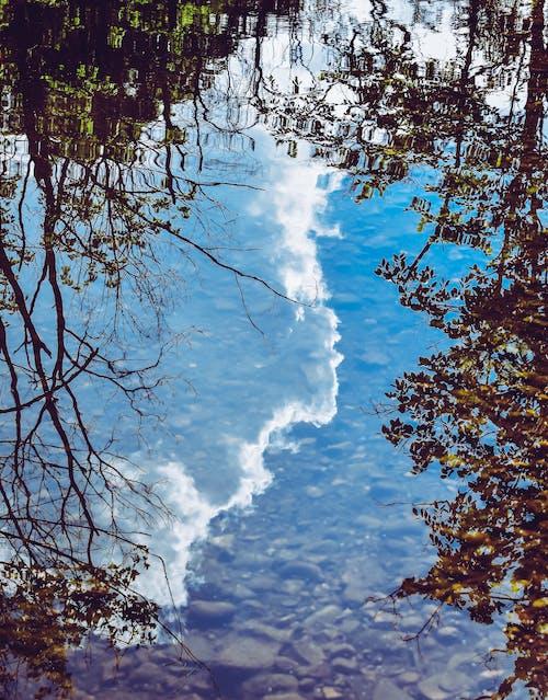 Photos gratuites de arbres, bleu, eau, reflets