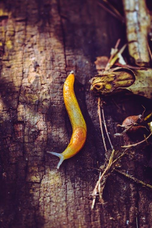 기는, 끈적끈적한, 무척추동물, 민달팽이의 무료 스톡 사진