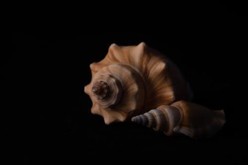 Gratis stockfoto met hd achtergronden, mac achtergrond, schelp, schelpdieren