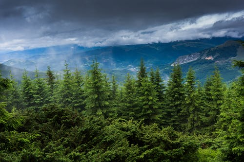 Darmowe zdjęcie z galerii z drzewa, drzewo iglaste, las deszczowy, malowniczy