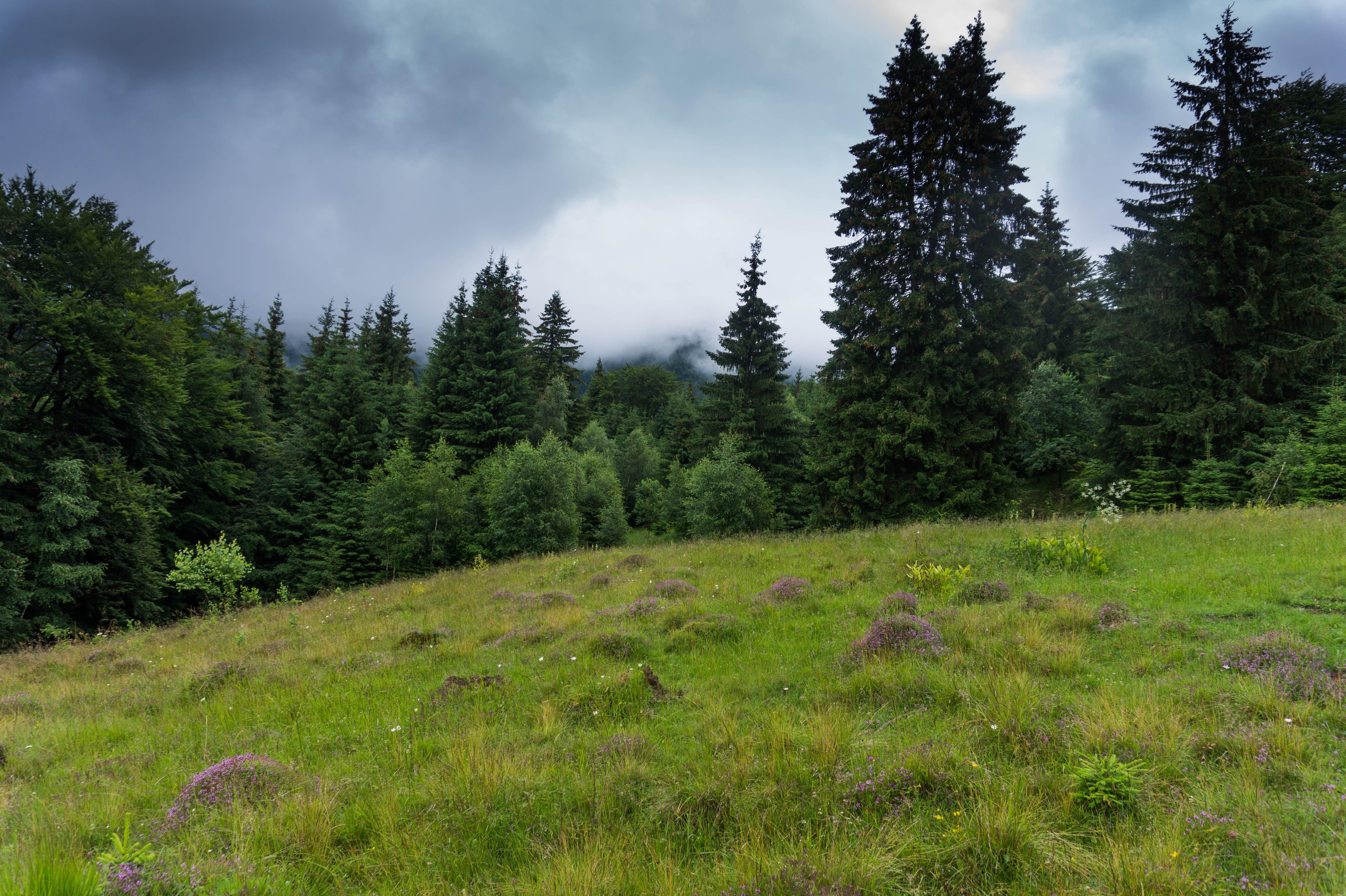 Kostenloses Stock Foto zu bäume, gras, grasfläche, landschaftlich