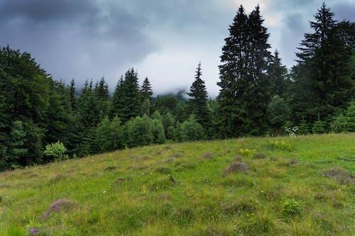 경치가 좋은, 나무, 숲, 자연의 무료 스톡 사진