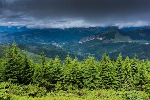 Darmowe zdjęcie z galerii z drewno, drzewa, góra, krajobraz